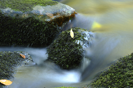 Detail of flowing waters of a little River in autumn in the bavarian forest,Bavaria,Germany LANG_EVOIMAGES