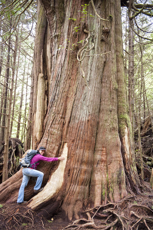 adventuresome: Woman hugging giant cedar,Tofino,BC,Canada LANG_EVOIMAGES