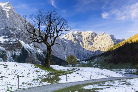 acer: Bare Sycamore Maple Tree (Acer pseudoplatanus), Karwendel Mountains, Grosser Ahornboden, Alpine Park Karwendel, Tyrol, Austria LANG_EVOIMAGES