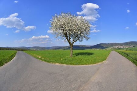 Forked Road with Blossoming Cherry in Spring, Miltenberg, Spessart, Franconia, Bavaria, Germany