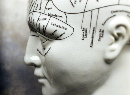 Close-up of Phrenology Mannequin    LANG_EVOIMAGES