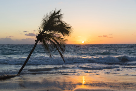 leaned: Coconut palm tree in surf on beach at sunsrise, Playa Bavaro, Punta Cana, La Altagracia Province, Dominican Republic, Caribbean LANG_EVOIMAGES