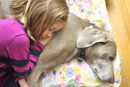 tenderly: Candid portrait of a 5 year-old girl sleeping with her pet Weimaraner dog on cushion, on the floor at home, Canada