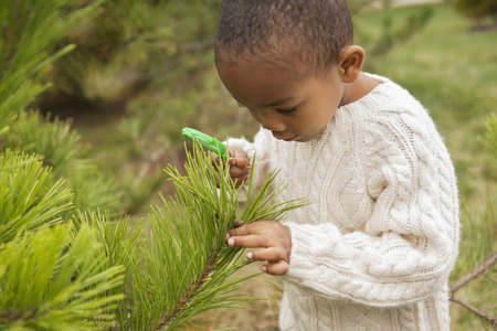 pinaceae: Boy Examining Pine Tree Branch with Magnifying Glass, Maryland, USA LANG_EVOIMAGES