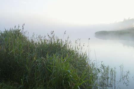 Reeds by Lake on Misty Morning, Fischland-Darss-Zingst, Mecklenburg-Western Pomerania, Germany