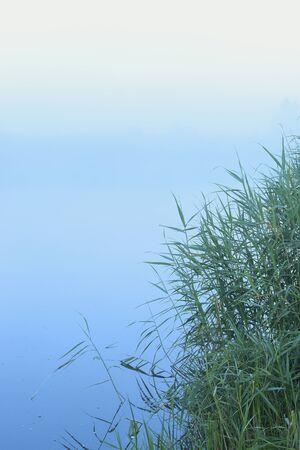 Lake and Reeds on Misty Morning, Fischland-Darss-Zingst, Mecklenburg-Western Pomerania, Germany