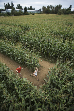 High angle view of children running through corn maze at farm, Fraser River Valley, British Columbia, Canada LANG_EVOIMAGES