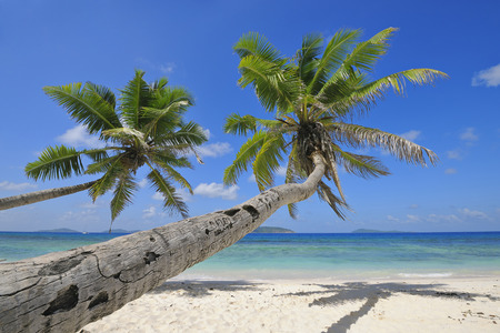 leaned: Palm Trees on Beach with Indian Ocean, La Digue, Seychelles LANG_EVOIMAGES
