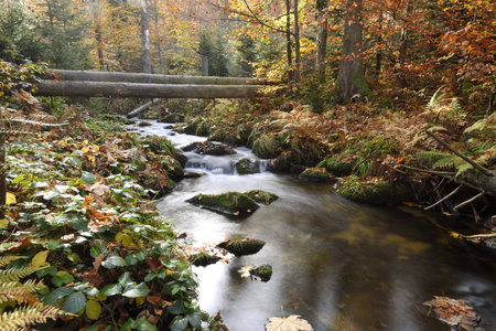 streamlet: Landscape of a river (Kleine Ohe) flowing through the forest in autumn, Bavarian Forest National Park, Bavaria, Germany LANG_EVOIMAGES