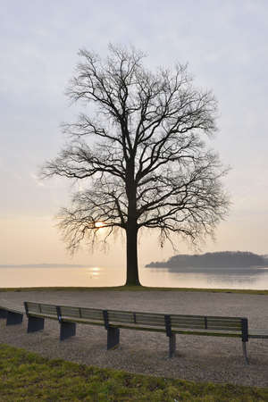 Park benches and tree at Lake Schwerin, Schwerin, Western Pomerania, Mecklenburg-Vorpommern, Germany LANG_EVOIMAGES