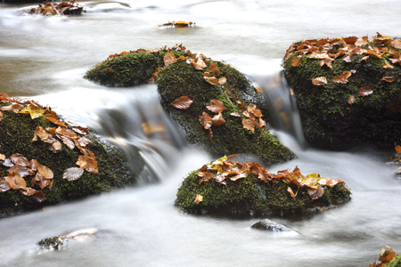 Detail of moss covered rocks and flowing waters of a river in autumn, Bavarian Forest National Park, Bavaria, Germany LANG_EVOIMAGES