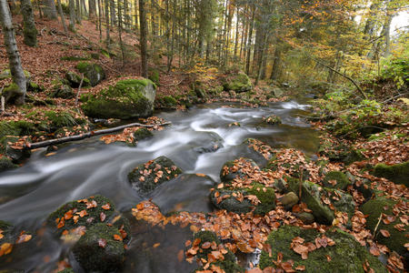 Landscape of a river (Kleine Ohe) flowing through the forest in autumn, Bavarian Forest National Park, Bavaria, Germany LANG_EVOIMAGES
