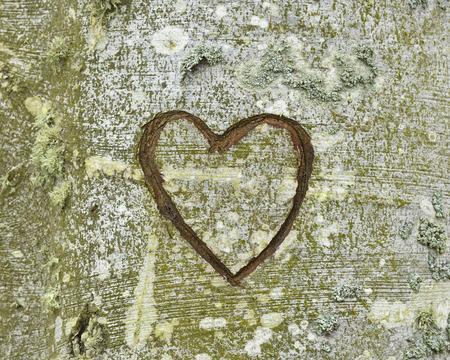 Carved Heart on Tree, Nienhagen, Bad Doberan, Western Pomerania, Germany