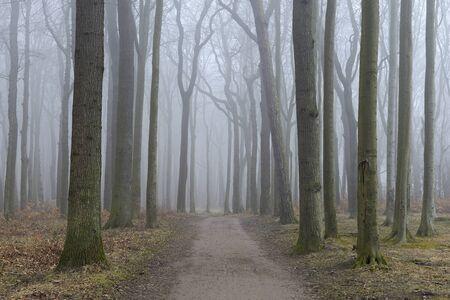 Coastal Beech Forest with Path and Fog, Gespensterwald, Nienhagen, Bad Doberan, Western Pomerania, Germany LANG_EVOIMAGES