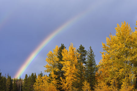 Rainbow and Mixed Forest in Autumn, Grand Teton National Park, Jackson, Wyoming, USA LANG_EVOIMAGES