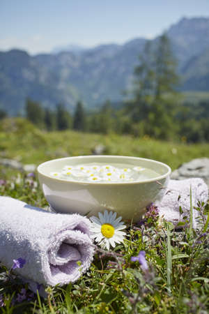 holistic view: Oxeye Daisy by Bowl with Water and Chamomile, Strobl, Salzburger Land, Austria LANG_EVOIMAGES