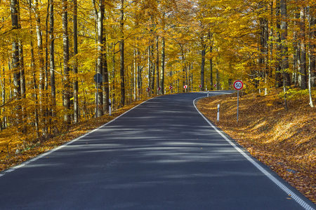 personal perspective: Road View from a Scenic Route in Autumn Forest, Spessart, Franconia, Bavaria, Germany
