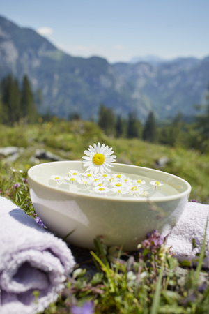 holistic view: Oxeye Daisy on Bowl with Water and Chamomile, Strobl, Salzburger Land, Austria