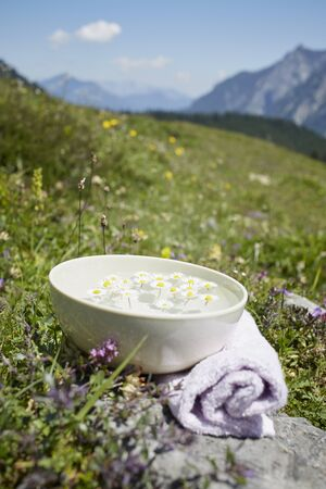 holistic view: Bowl with Water and Chamomile, Strobl, Salzburger Land, Austria
