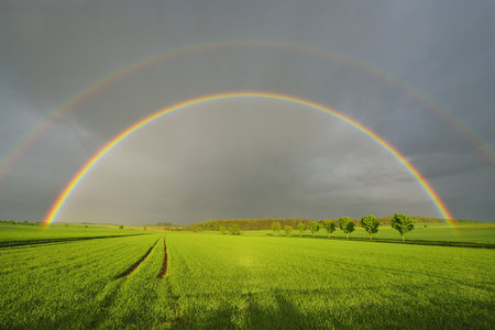 Maple Trees in Grain Field with Double Rainbow in Spring, Bad Mergentheim, Baden-Wurttemberg, Germany LANG_EVOIMAGES