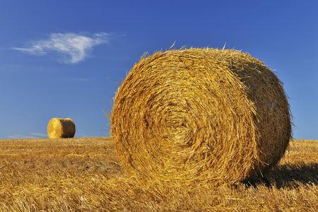 Hay Bale, Province of Siena, Tuscany, Italy