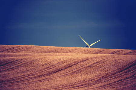 Wind turbine blades sticking up above cut grain field, Canada LANG_EVOIMAGES