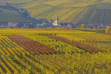 Colorful Vineyards in Autumn, Escherndorf, Maininsel, Alte Mainschleife, Mainfranken, Franconia, Bavaria, Germany LANG_EVOIMAGES