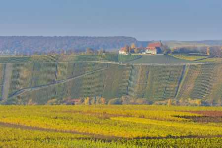 Colorful Vineyards in Autumn, Vogelsburg, Volkach, Maininsel, Alte Mainschleife, Mainfranken, Franconia, Bavaria, Germany LANG_EVOIMAGES