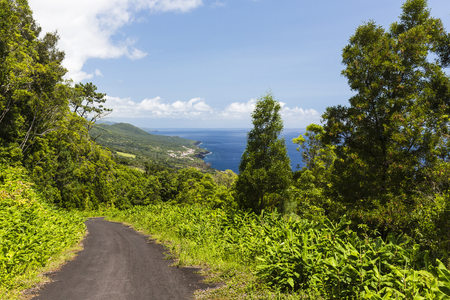 Road leading down through trees with elevated view of coastline to Sao Caetano and Terra do Pao on Pico Island, Azores