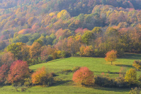 glades: Countryside with Colorful Cherry Trees in Autumn, Bessenbach, Spessart, Bavaria, Germany