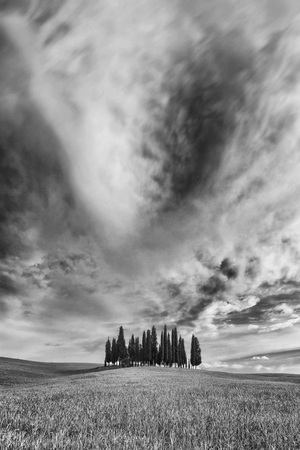 Small grove of cypress trees on an open field in San Quirico DOrcia in Val dOrcia in Tuscany, Italy, in black and white LANG_EVOIMAGES