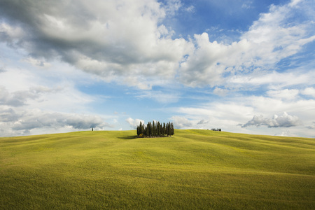 Small grove of cypress trees on an open field in San Quirico DOrcia in Val dOrcia in Tuscany, Italy