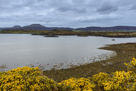 Sea bay at low tide with gorse bushes in springtime at the village of Dunvegan on the Isle of Skye in Scotland, United Kingdom