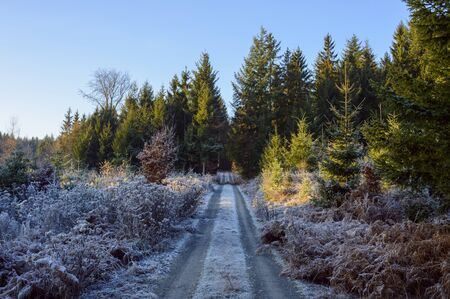 Forest path with rime covering the ground in autumn in the Odenwald hills in Bavaria, Germany LANG_EVOIMAGES