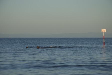 Swimming: