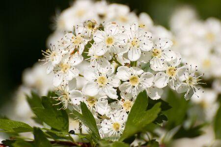 fleurs romantique: fleurs romantiques Banque d'images