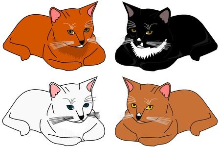 Illustration of variety of cats, isolated on a white background Illustration