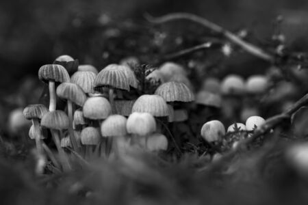 Group of mushrooms in forest