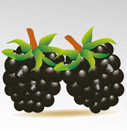 rich in vitamins: blackberry isolated  Illustration
