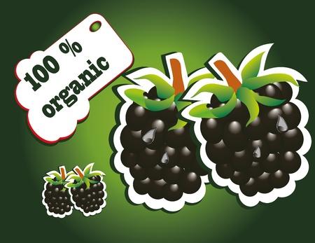 organic blackberry Stock Vector - 13352035