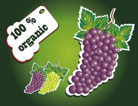 organic dark grape Stock Vector - 13352043