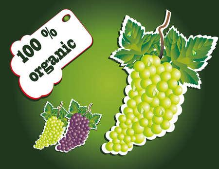grape juice: organic light grape