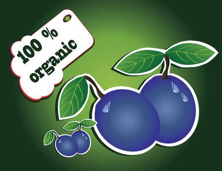 organic plum Stock Vector - 13352037