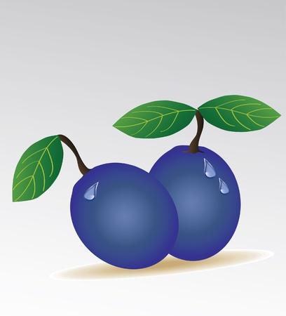 fruited: plum isolated Illustration