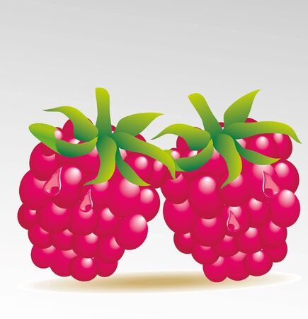 fruited: raspberry isolated Illustration
