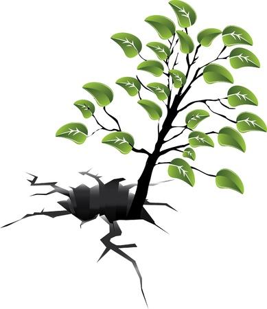 tree in the earth gap