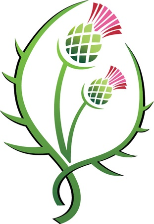 distel: Thistle Illustration floral Emblem von Schottland Illustration
