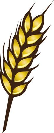 planta de maiz: espiga de trigo Vectores