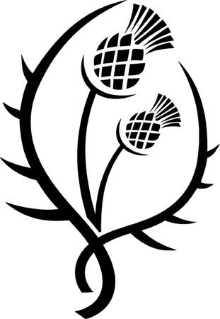 distel: Thistle Blumenemblem von Schottland skizzieren isoliert Illustration