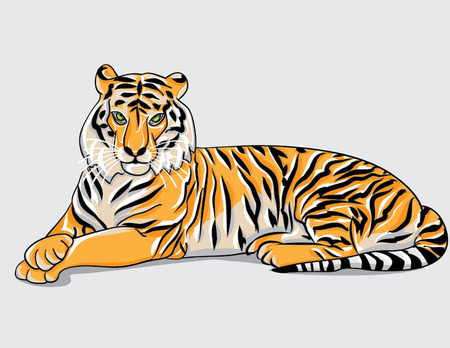 tiger lies illustration Vector